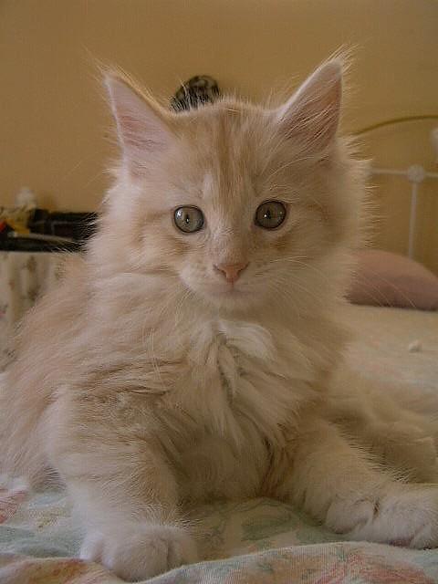 diy safe cat repellent